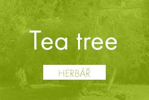 Bio herbář: Tea tree