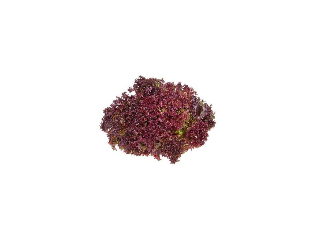 Salát listový čerstvý Lollo Rosso