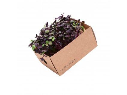 Ředkvička fialová(1)