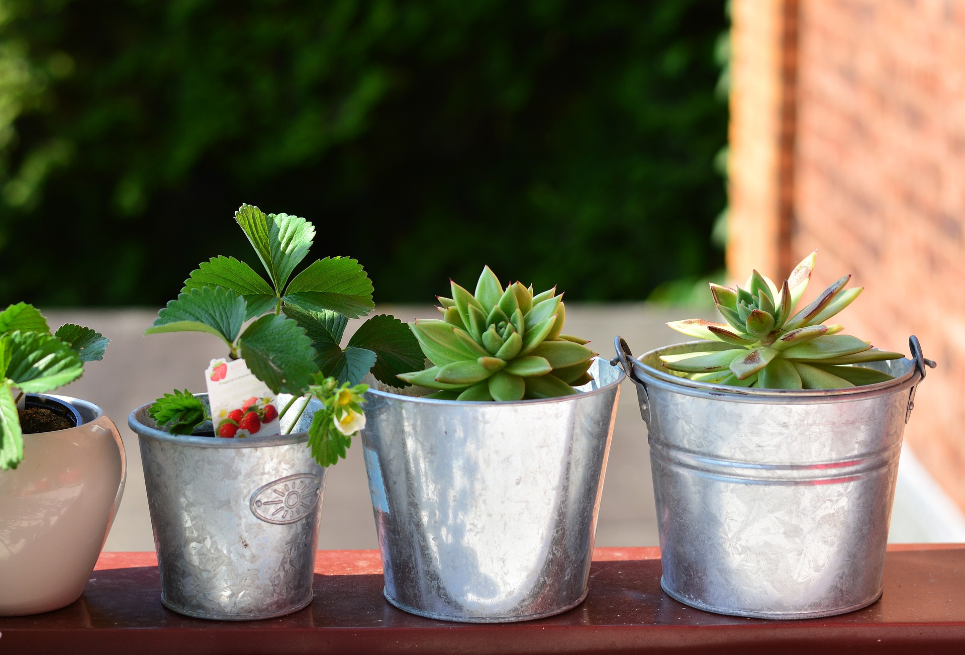 Jaké bylinky a dobroty můžete sbírat v červnu?