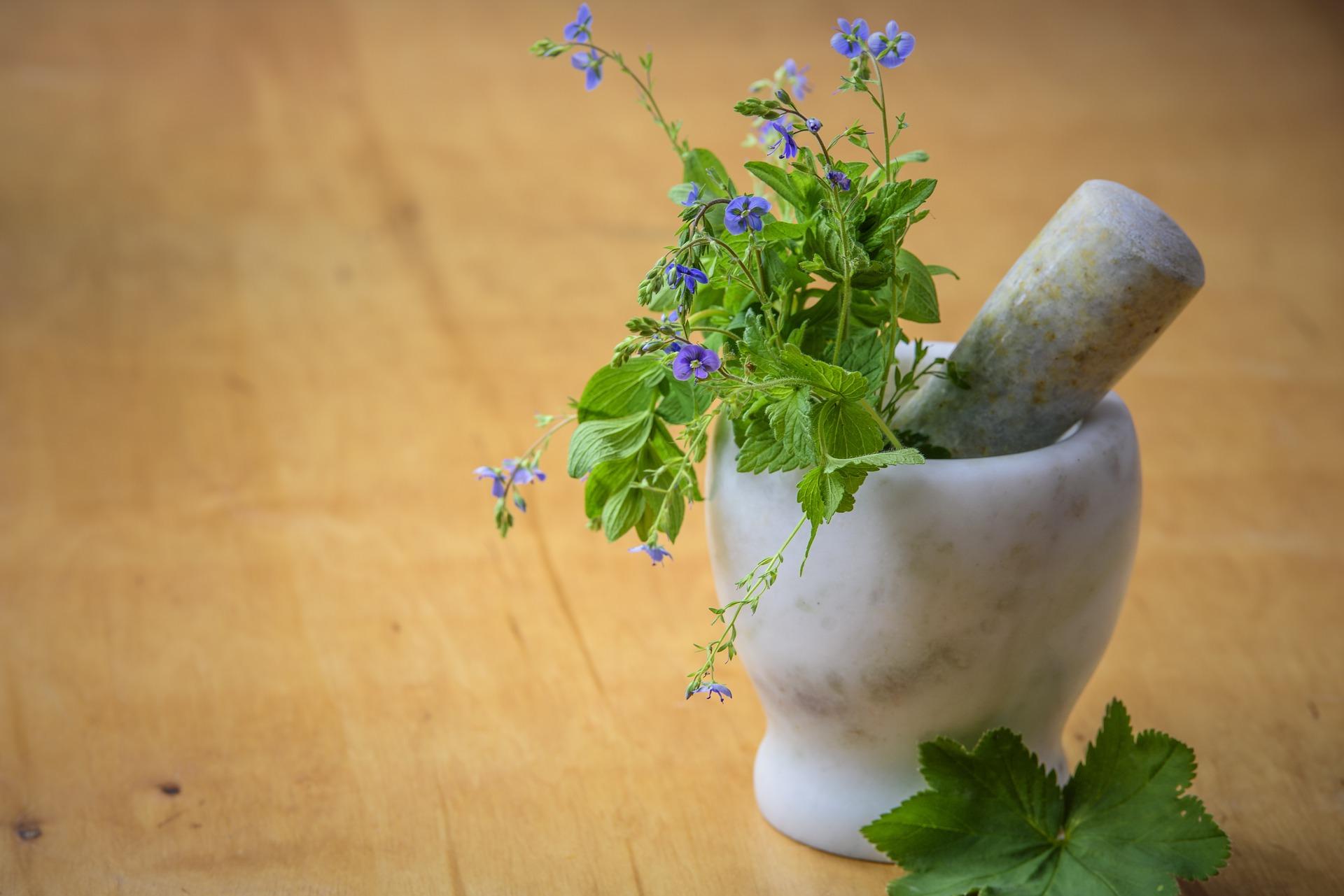 Sběr, sušení a skladování léčivých rostlin