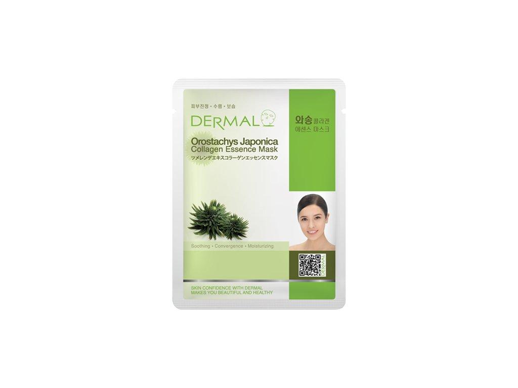 DERMAL Korea Orostachys Japonica Collagen Essence Mask - Esenční kolagenová maska s borovicí Japonica