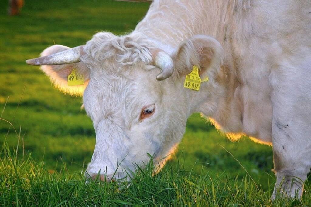 Bio maso má zelenou