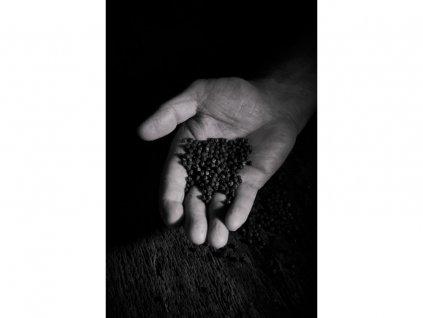 Černý pepř Ba Ria Zanzibar Peugeot