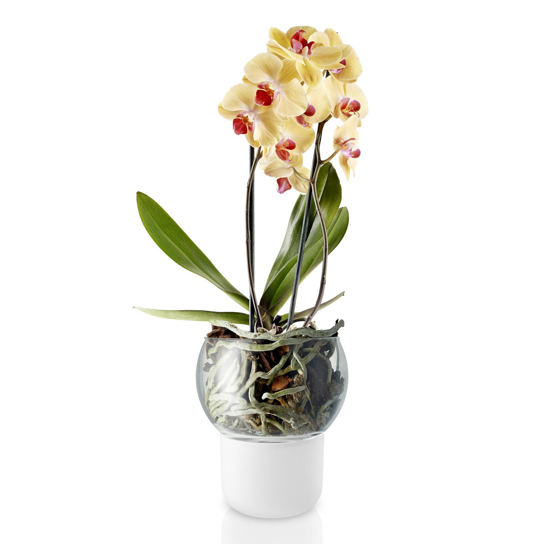 Sklenený samozavlažovací kvetináč na orchidey Ø 15 cm
