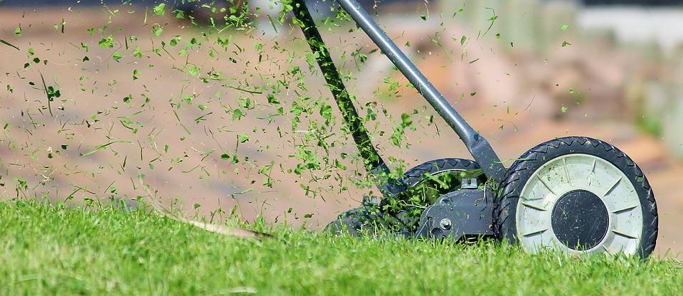 Hnojení trávníku