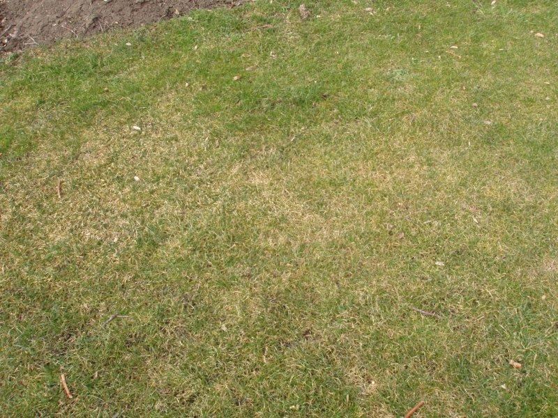 Likvidace starých a nežádoucích trávníků
