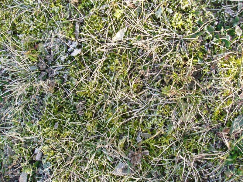 Mechy v trávníku