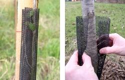 Ochrana kmenů stromků