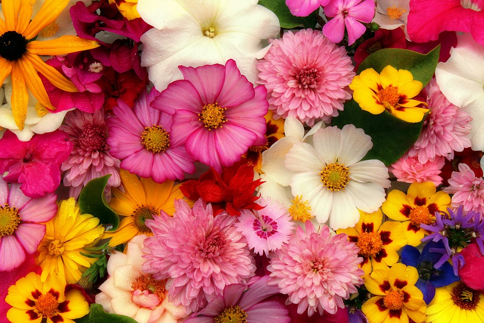 Semínka květin