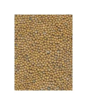 Semínka zelené hnojení