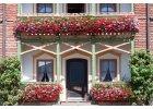 Hnojiva na balkonové rostliny