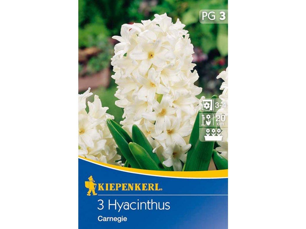 Cibuloviny KIE - Hyacinthus Carnegie