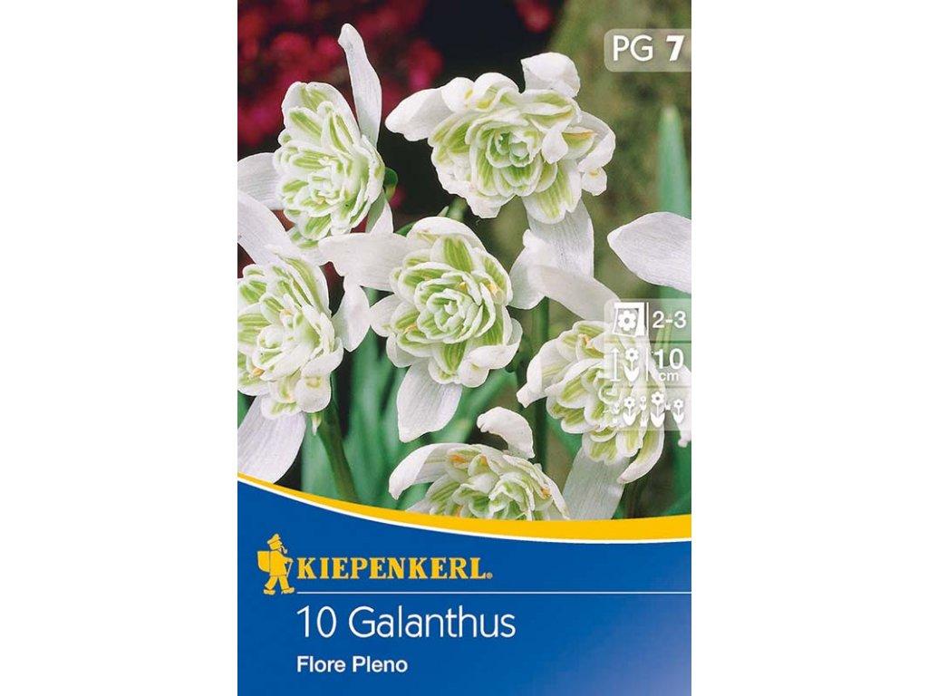 Cibuloviny KIE - Galanthus Flore Pleno