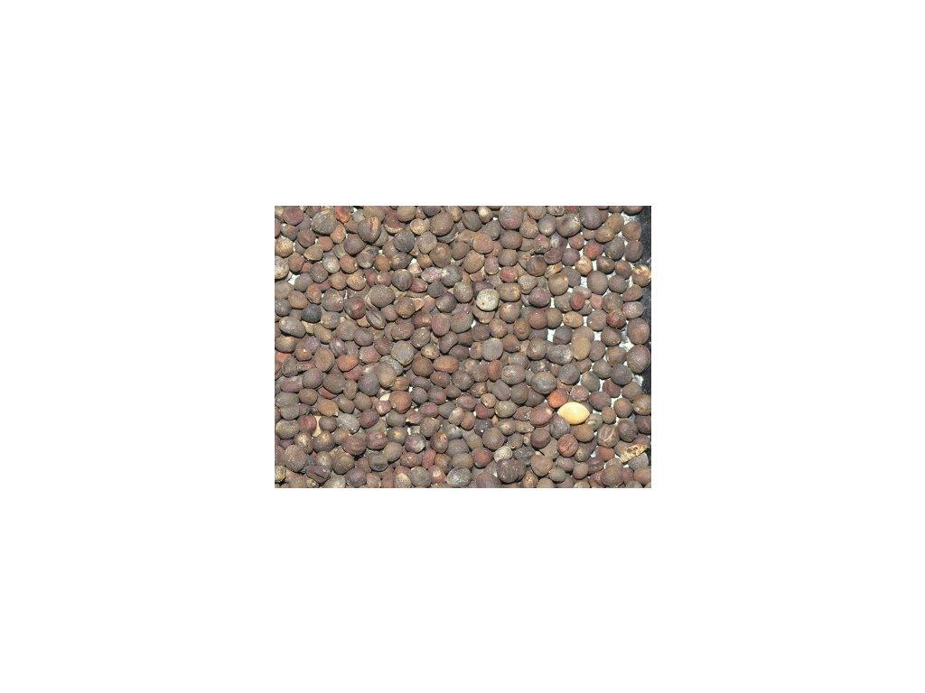 Krmná řepa KOSTELECKÁ BARRES  200 g červená č. partie:8-2333-60602/01
