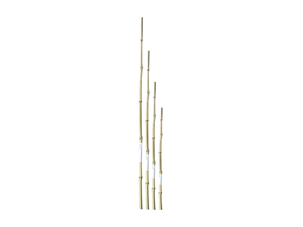 Bambusová tyčka 150 cm 14-16 mm 2 ks