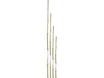 Bambusová tyčka 60 cm
