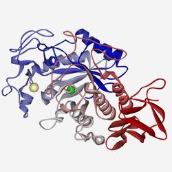 Pancreatic alpha amylase