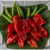 Bhoot Jolokia ( Ghost Chili pepper )