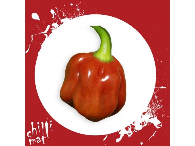 Sazenice a semínka chilli Habanero cappuccino