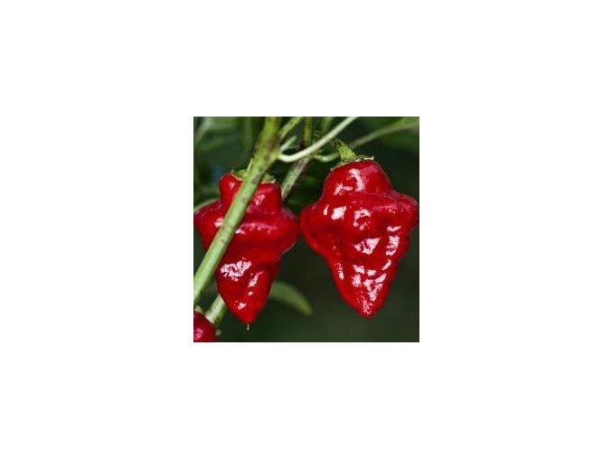 209448 peper tasmanian red habanero tasmanian