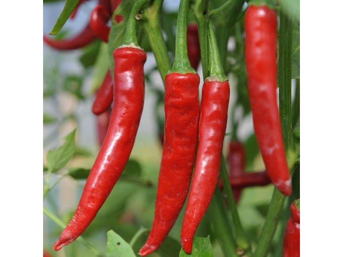 cayene red