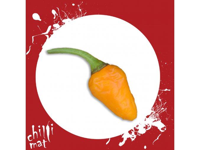 Sazenice a semínka chilli Golden Nuget