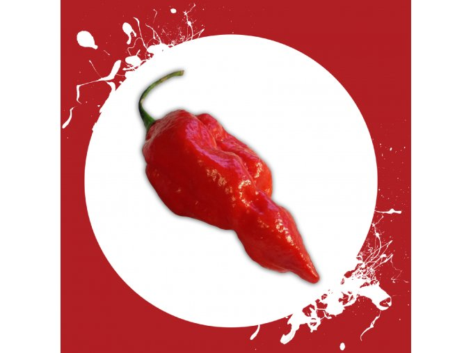 Sazenice a semínka chilli Naga morich