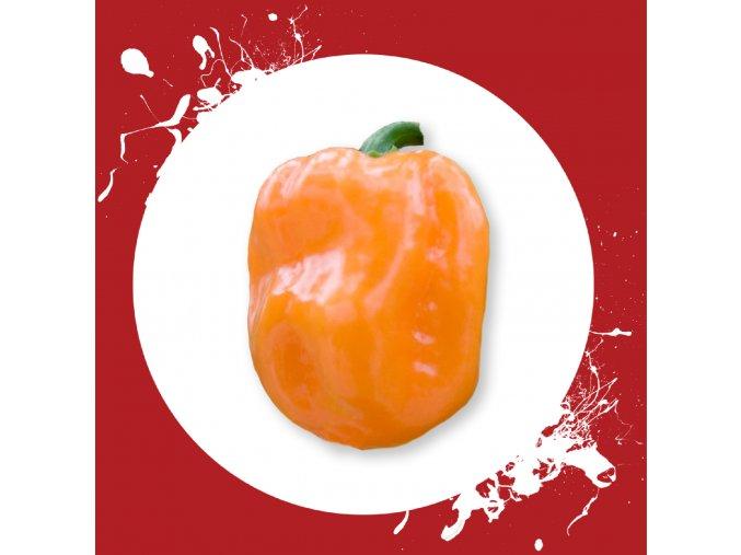 Sazenice a semínka chilli Habanero orange