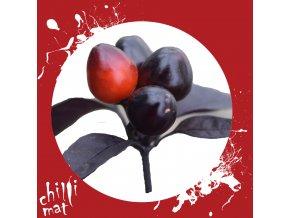 Sazenice a semínka chilli Black Pearl