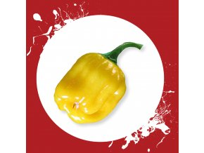 Sazenice a semínka chilli Habanero yellow