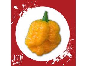 Sazenice a semínka chilli Trinidad scorpion moruga Yellow