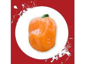 Habanero orange sama
