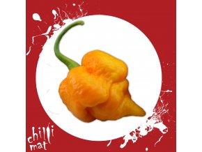 Sazenice a semínka chilli 7 pot yellow