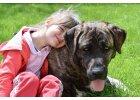 10 důvodů, proč jsou psi a děti dobrá kombinace?