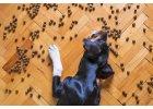 Víte, jak poznat kvalitní psí granule?