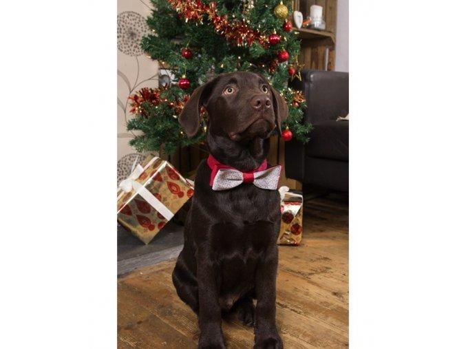 Vianočná mašlička pre psa