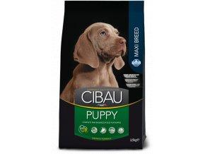 cibau puppy maxi@web