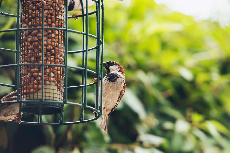 Krmítko není popelnice. Čím tedy krmit ptáčky?