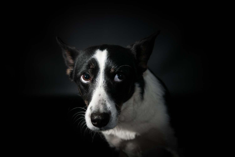 Signály, že je pes ve stresu