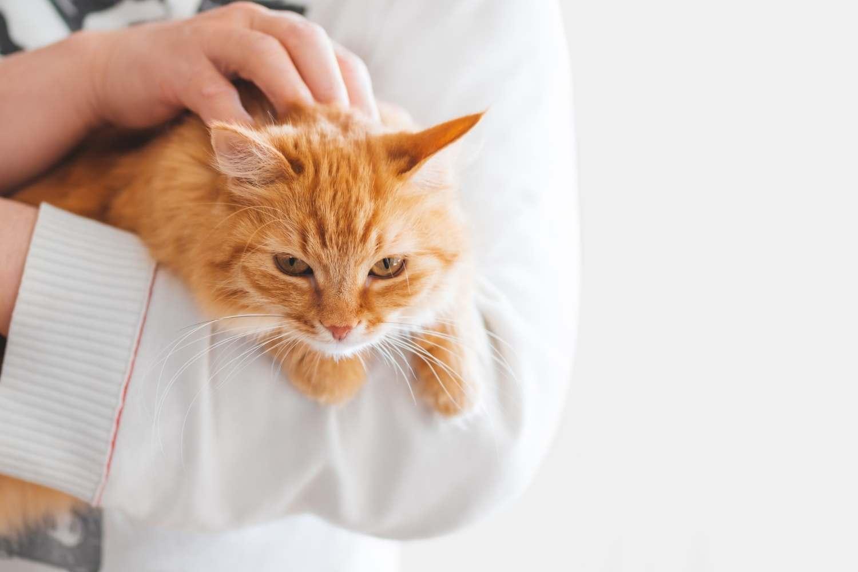 Proč nechat vykastrovat kočku i kocoura