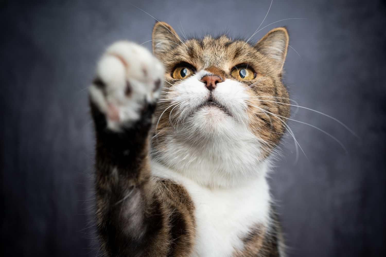 3 domácí pamlsky bez lepku, které si kočka zamiluje