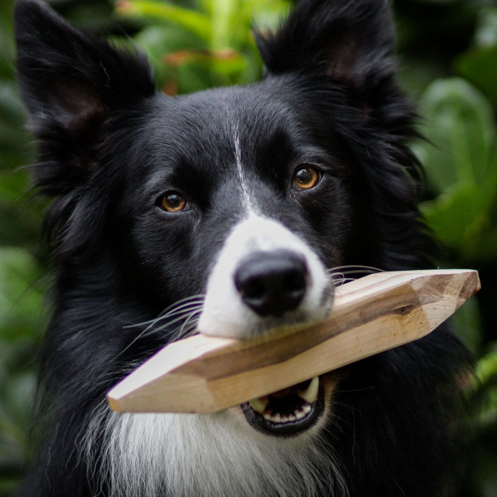 Hracky pro psy drevena kost (10)