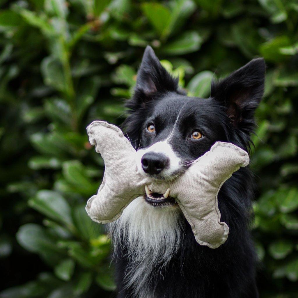 Hracky pro psy kost (5)