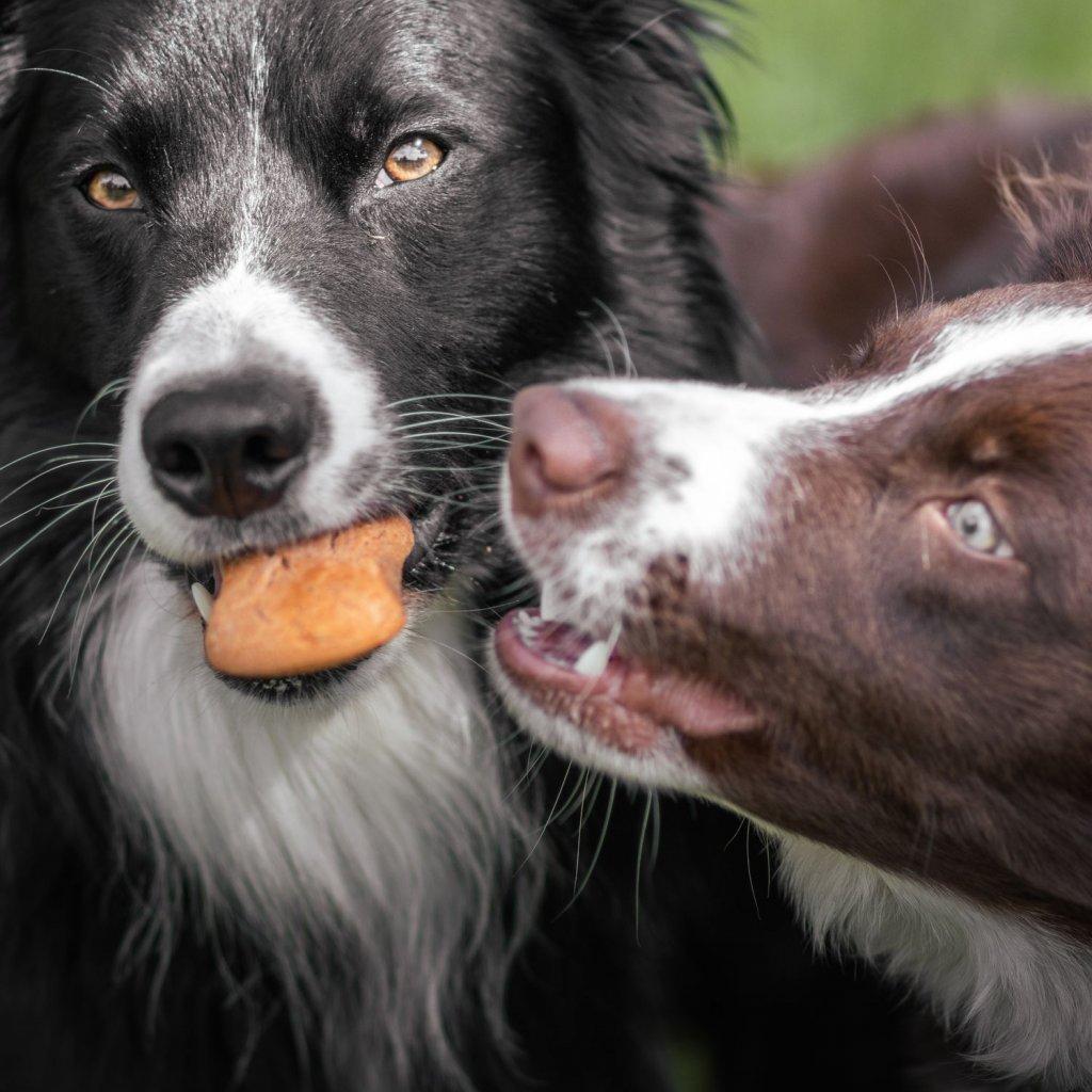 Suchary pro psy jehneci (7)