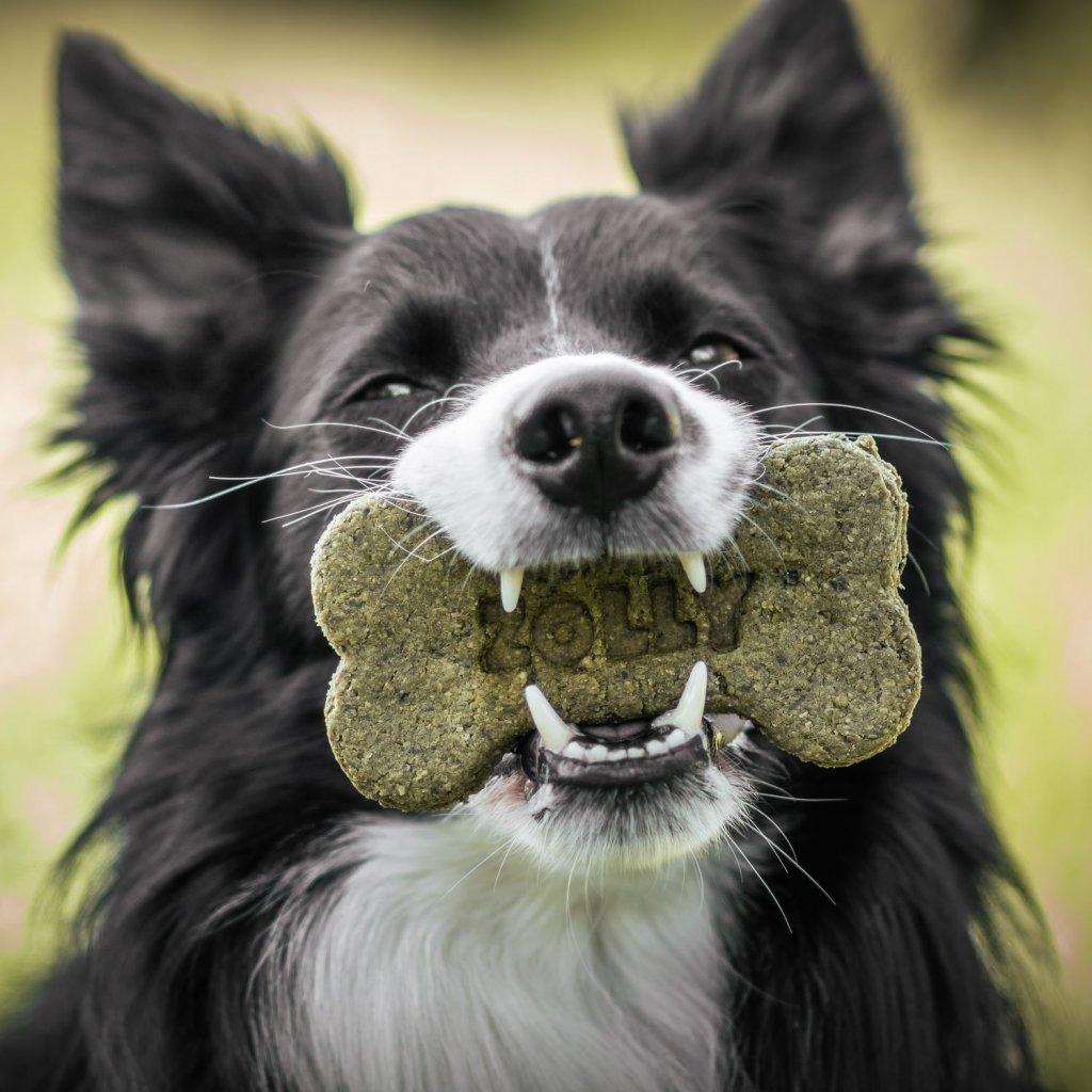 Susenky pro psy spenatove (4)