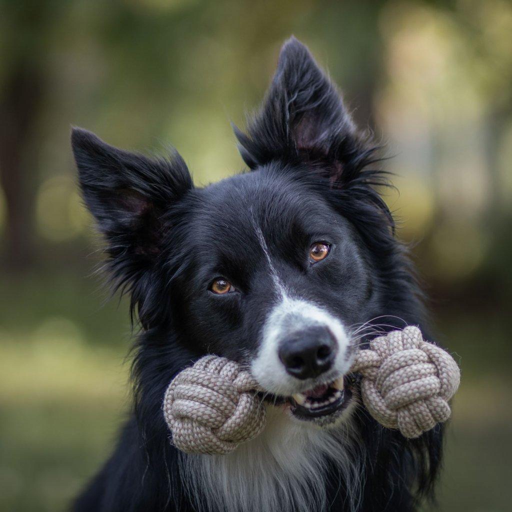 Hracky pro psy cinka (7)