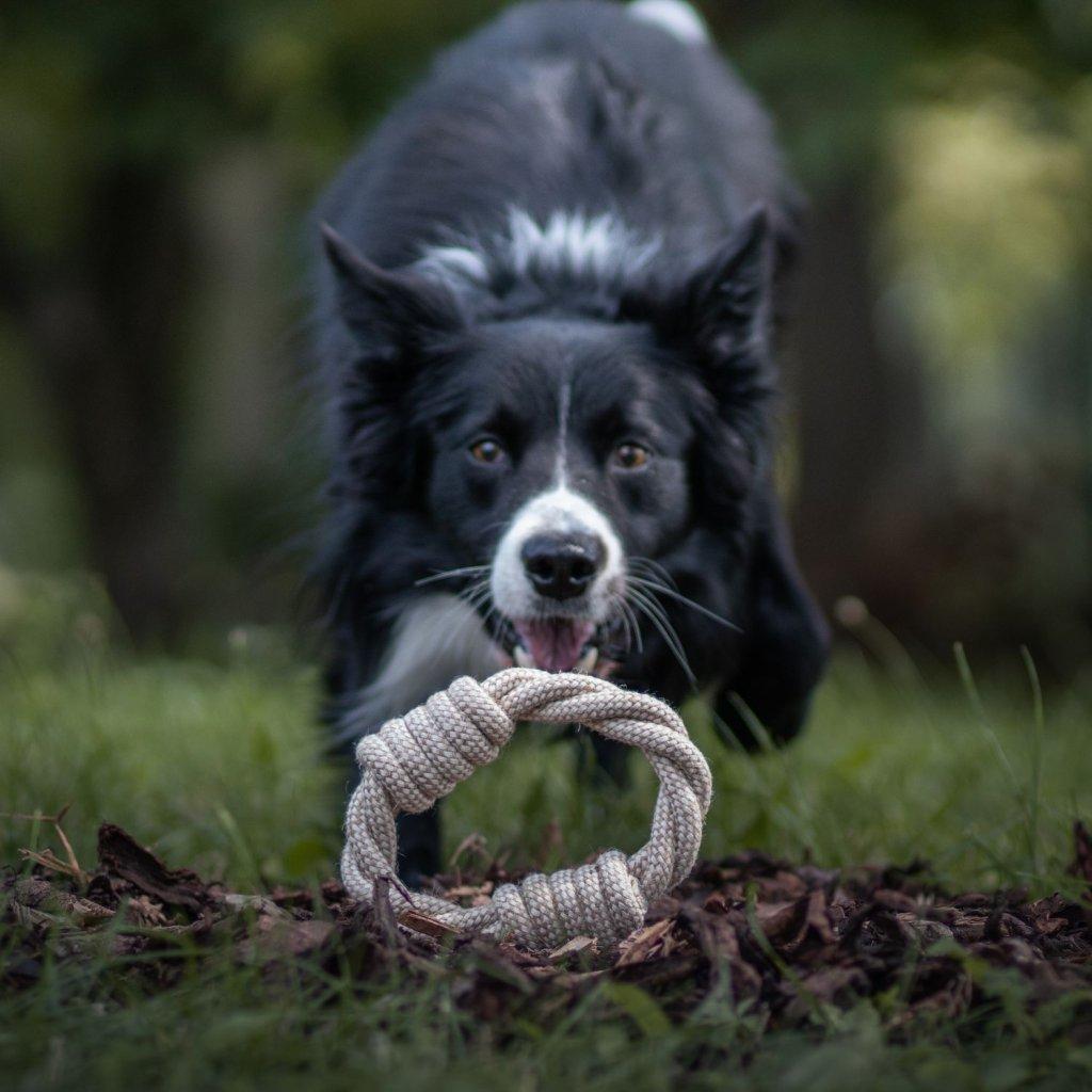 Hracky pro psy kruh (8)