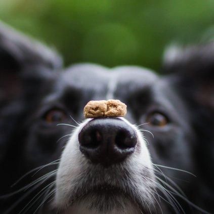 Konopne susenky pro psy hovezi (2)