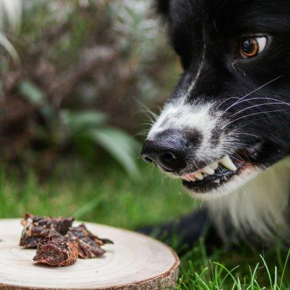 Pamlsky pro psy danek (8)